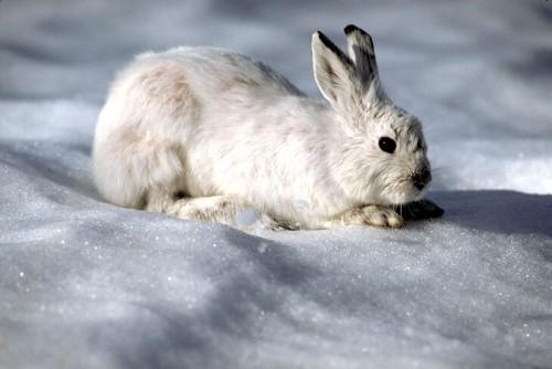 С биноклем за… зайцем-беляком.