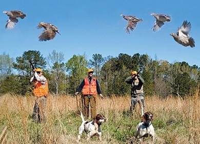 Ружье для охоты на голубей