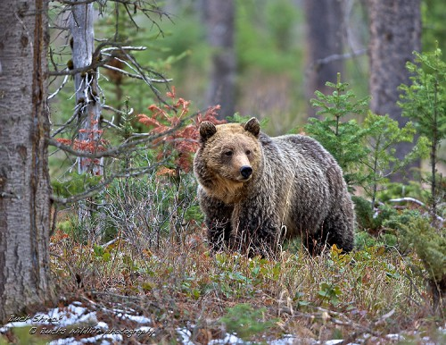 Фотограф Buck Shreck. (52 фото)