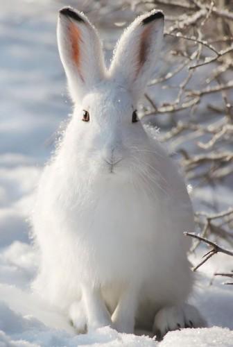 Где и когда искать зайца-беляка.