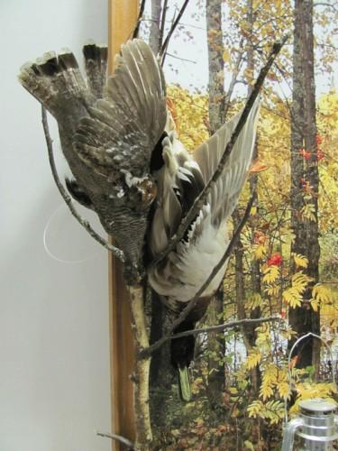 """Выставка охотничьих трофеев """"Вятская охота"""". (40 фото)"""