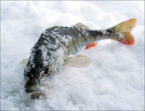 Прикормка для донных рыб.