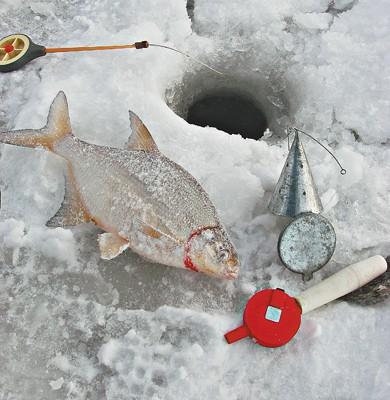 Прикармливание рыбы зимой.