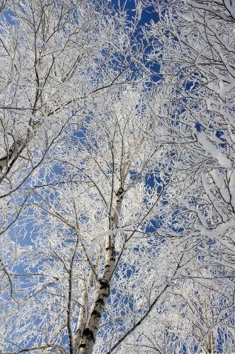 Зимние пейзажи. (30 фото)