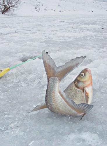 где ловить рыбу в феврале