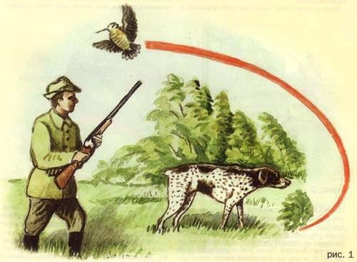 Поведение вальдшнепа под подружейной собакой.