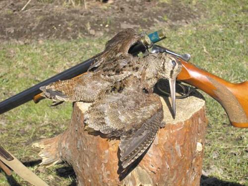 Секреты охоты на тяге: практические советы.