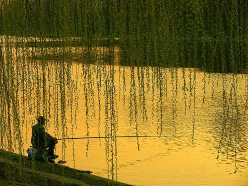Начало лета на реке. Часть 1. Особенности поведения рыбы на малой и большой реке.