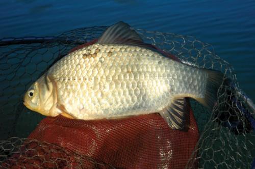 клюет ли рыба в ветреную погоду