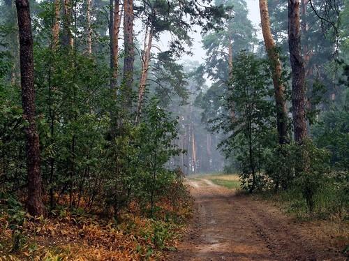 Как не погибнуть в лесу. Советы спасателей.