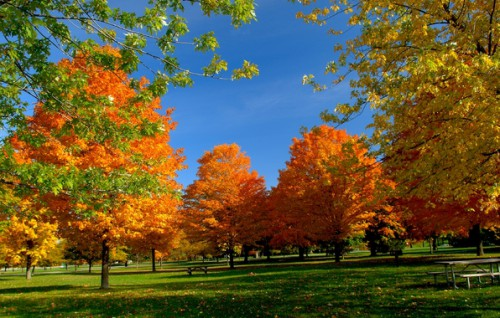 Осень. Фото - пейзажи. Часть 1. (30 фото)