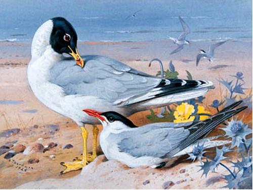 Работы художника Арчибальда Торберна (Archibald Thorburn). Часть 2. (30 фото)