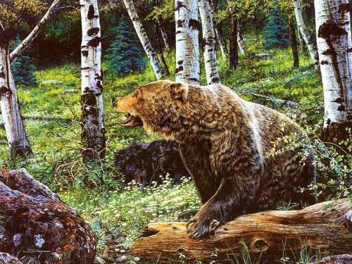Картины дикой природы (животные). Часть 1. (25 фото)