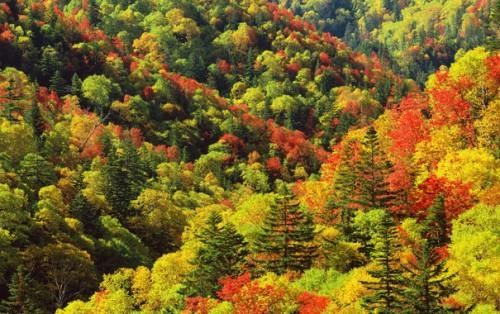 Осень. Фото - пейзажи. Часть 4. (30 фото)