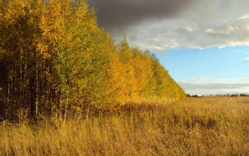 Осень. Фото - пейзажи. Часть 5. (30 фото)