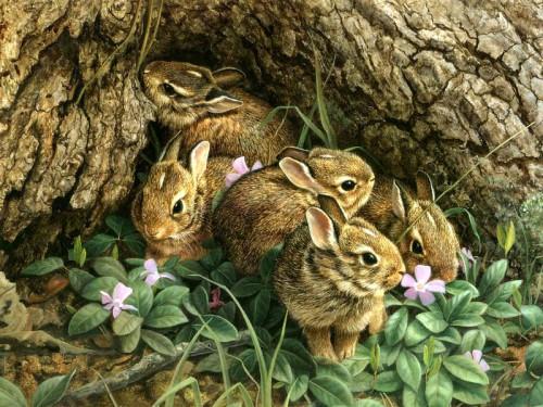 Картинки природа с животными и природой