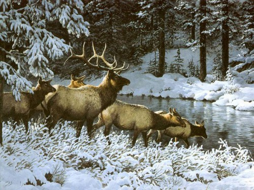 Картины дикой природы (животные). Часть 3. (29 фото)