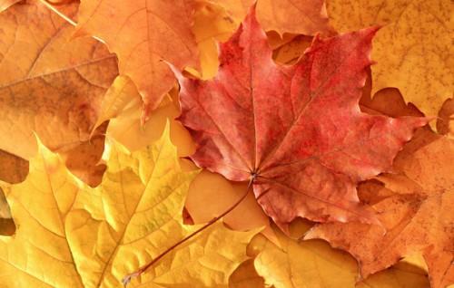 Осень. Фото - пейзажи. Часть 8. (30 фото)
