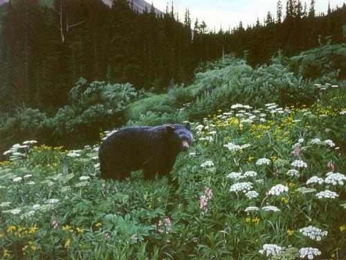 Картины дикой природы (животные). Часть 4. (29 фото)
