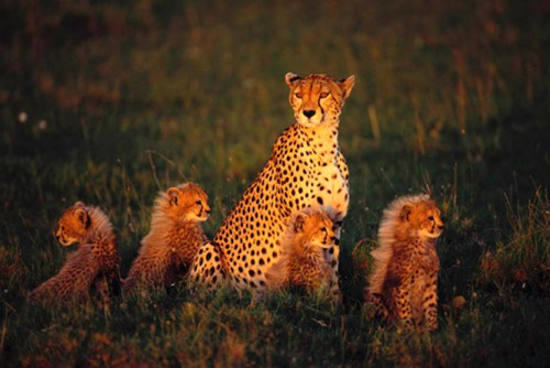 Работы фотографа Art Wolfe. Животные Африки. (15 фото)