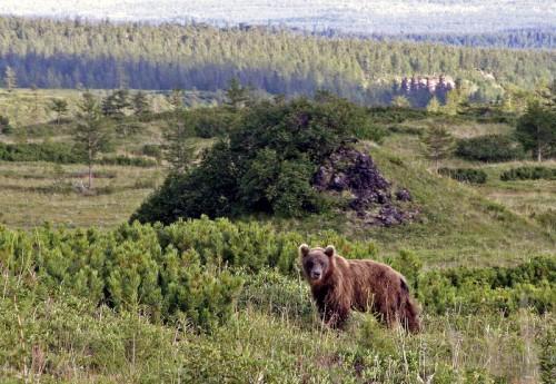 Человек и медведь: Как вести себя при встрече с опасным хищником. Часть 1.
