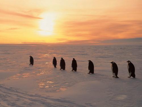 Пингвины. Часть 2. (30 фото)