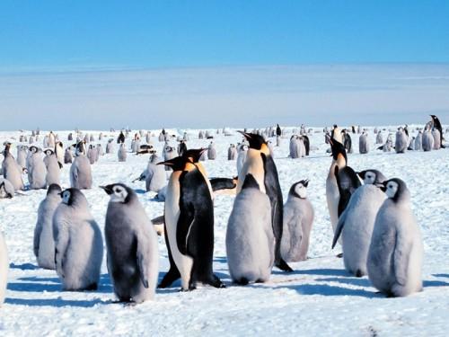 Пингвины. Часть 3. (30 фото)