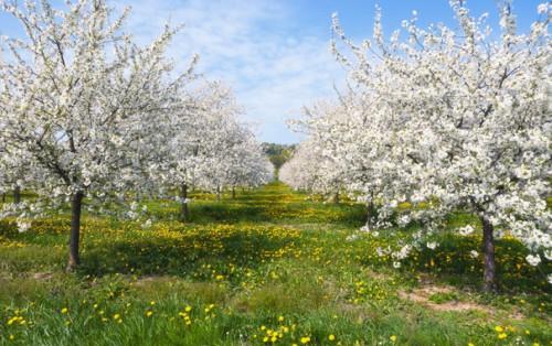 Фото с весенним садом
