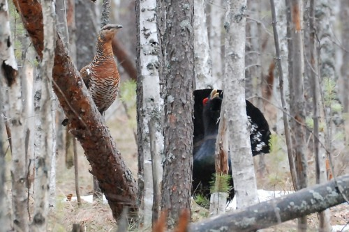Этика весенней охоты.