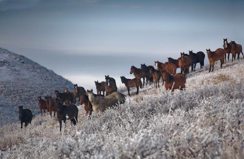 Красота по-казахстански. (24 фото)