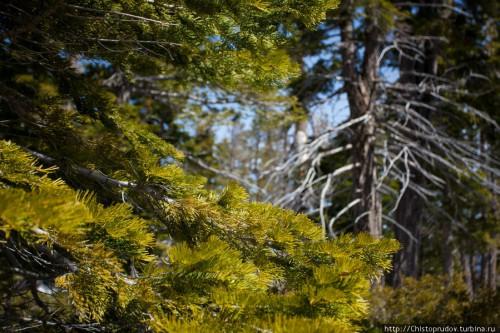 Природа озера Тахо. (30 фото)