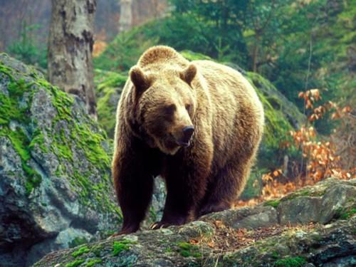 Человек и медведь: Как вести себя при встрече с опасным хищником. Часть 8.