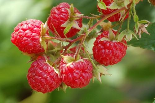 Чем полезны ягоды?