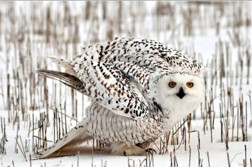 Работы фотографа Сергея Жданова. Птицы. Часть 1. (30 фото)