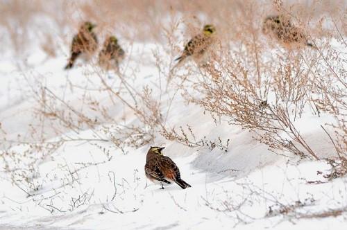 Работы фотографа Сергея Жданова. Птицы. Часть 2. (30 фото)