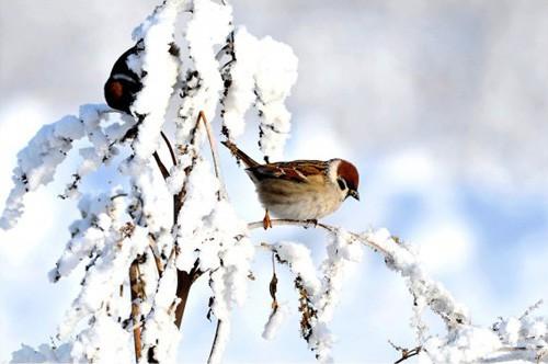 Работы фотографа Сергея Жданова. Птицы. Часть 3. (18 фото)