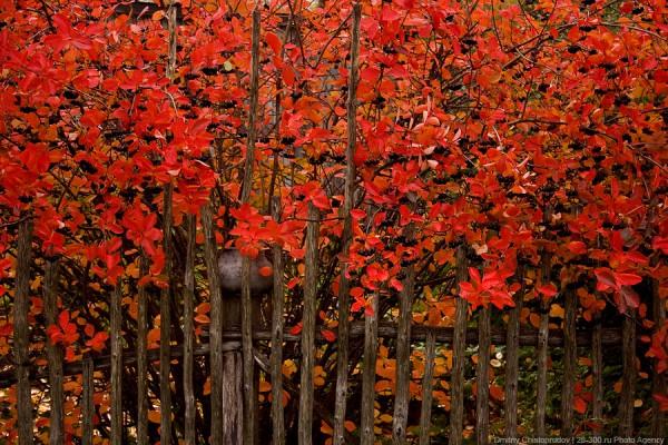 Осенняя Карелия. (43 фото)