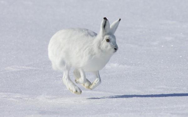 Охота на зайца. Часть 2.