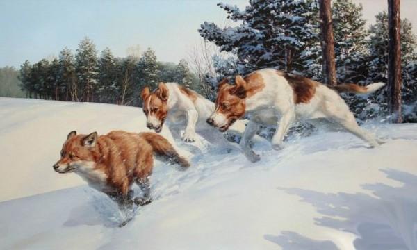 Лисица. Подготовка собак к промыслу.