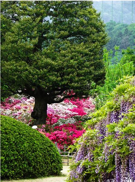 Асикага парк цветов фото