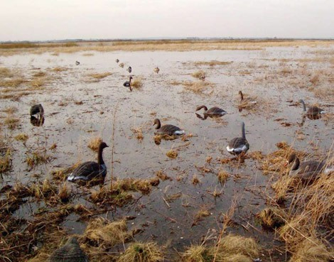 Охота на гуся: Перехитрить гуся непросто.
