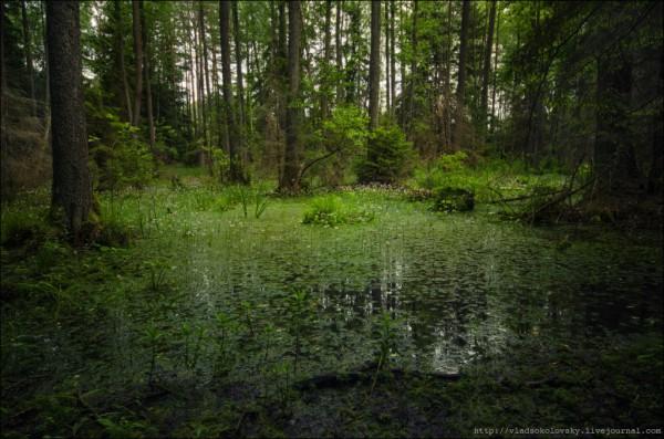Фотоотчёт фотохудожника Влада Соколовского. Один день в Беловежской пуще. (47 фото)