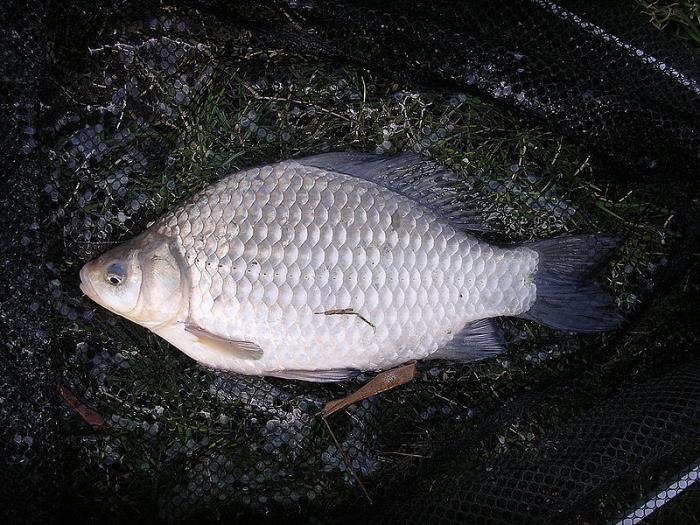 Предзимье, пикер и карась. Часть 1. Предпосылки успешной рыбалки.
