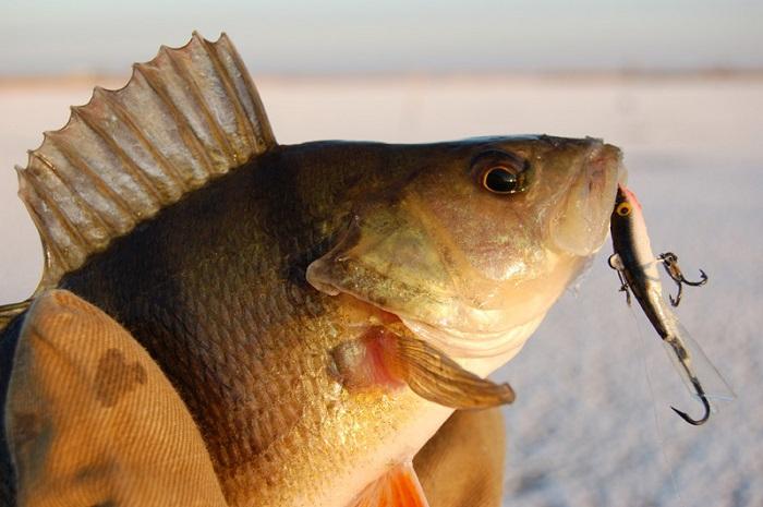 какая рыба клюет в ноябре