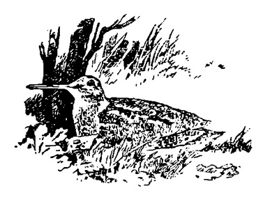 Весенняя охота по перу. Стрельба вальдшнепов на тяге.