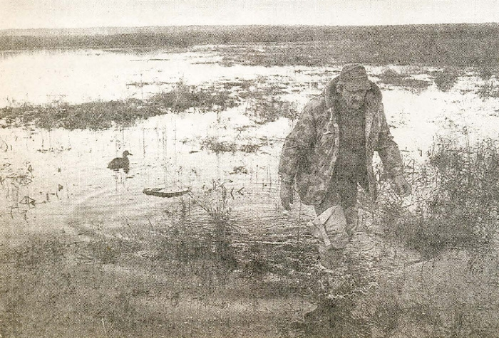 Молодому охотнику. Воспитание подсадных уток.