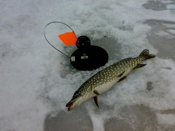 рыбалка на жерлицы в москве