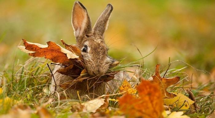 Охота на зайца. Часть 3. Охота на беляков «в узёрку».