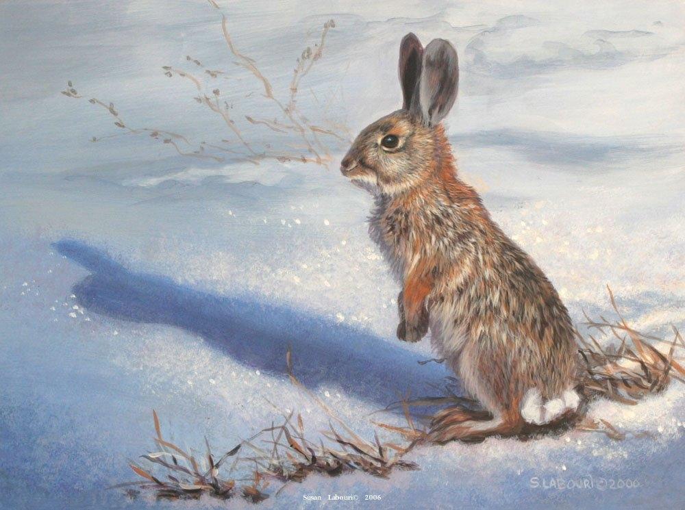Картинки по запросу охота на зайца