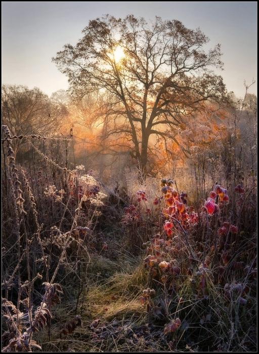 Работы фотографа Александра Киценко. «Сказочная неТайга». (27 фото)